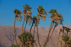 north of eilat - dom palms