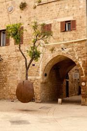 Jaffa Floating Orange Tree 2