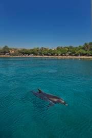 Eilat Dolphins' Reef