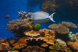 Eilat - the underwater observatory museum