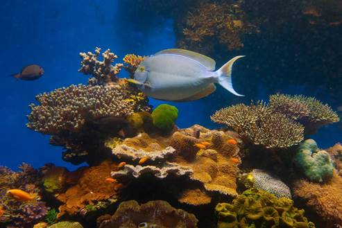 Eilat - the underwater observatory museum