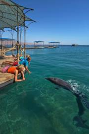 Feeding dolphins at the Dolphins' Reef in Eilat