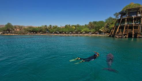 Eilat Dolphins' Reef 3
