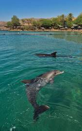 Dolphin Reef, the Red Sea, Eilat
