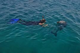 Dolphin's Reef, Eilat 4