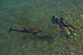 Eilat Dolphins' Reef 6