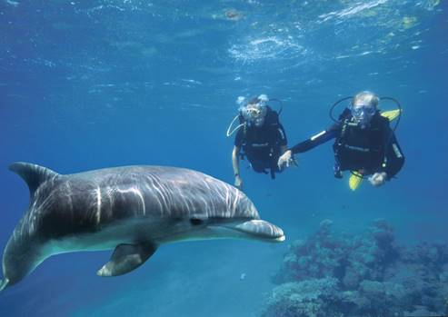 Dolphin Reef - Diving with a dolphin in the Red Sea.