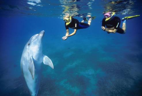 Dolphin Reef - Eilat - Diving with dolphins