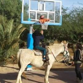 חווה הטיפולית מול הרי אדום - Red Mountain Therapeutic Riding Center