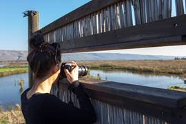 Birdwatching - Hula Valley