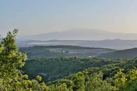 Green Galilee Pic