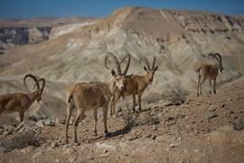 Negev Wild Life 1