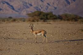 Negev Wild Life 2