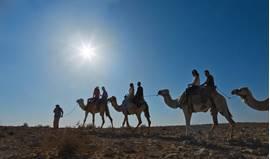 Negev Camels 3