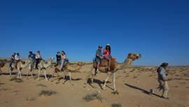 Negev Camels 2
