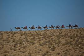 Negev Camels 1