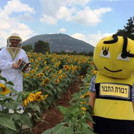 Dvorat Hatavor - דבורת התבור