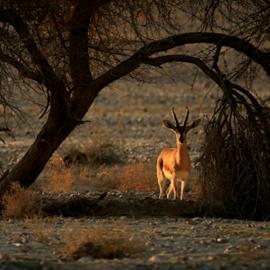 Dani Hadas photo from Planet Arava 1 - תמונה של דני  מפלאנט ערבה 1