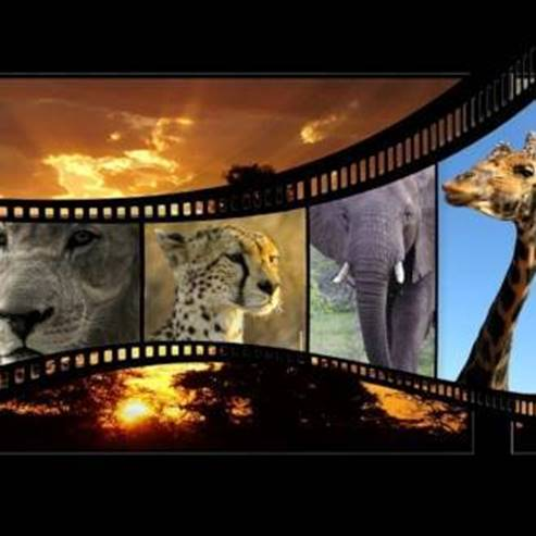Jerusalem Film Festival   Events   The official website for tourist