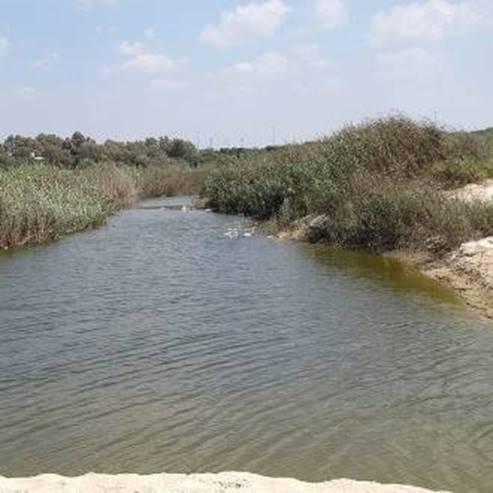נחל פולג - Poleg River