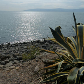 חוף גנים - טבריה - Ganim Beach - Tiberias