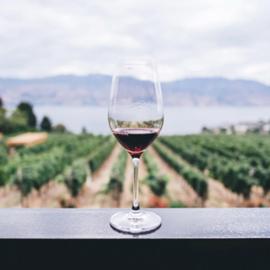 כוס יין ברקע גפנים - A Wine Glass With A Vineyard In The Background