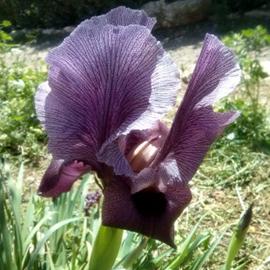 שמורת טבע אירוס ירוחם - Irus Yeruham Nature Reserve