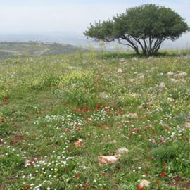 שמורת טבע גלבוע - Gilboa Nature Reserve