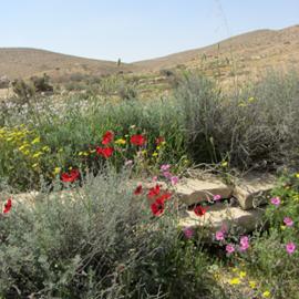 שמורת טבע הר הנגב -  Har Hanegev Nature Reserve