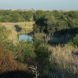 שמורת טבע חולות ניצנים - Holot Nitsanim Nature Reserve
