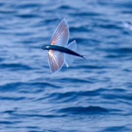 שמורת ים אבטח - Avtach Marine Reserve