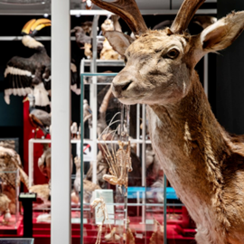 תצוגת פוחלצים - Taxidermy Exhibition