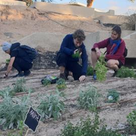 אנשים שותלים צמחים באדמה - People plant plants in the ground