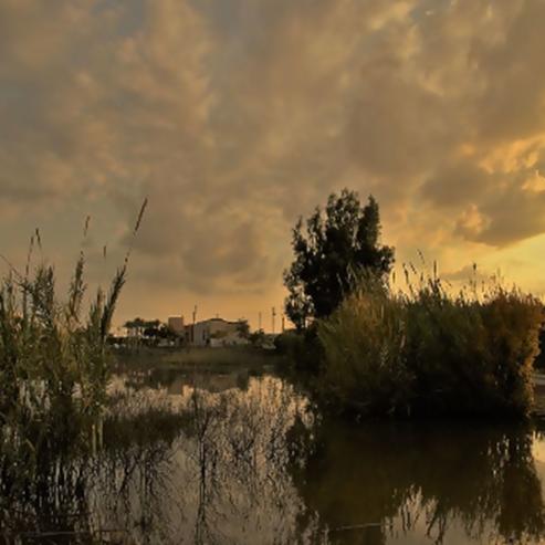 פארק הרצליה בשקיעה - Herzliya Park At Sunset