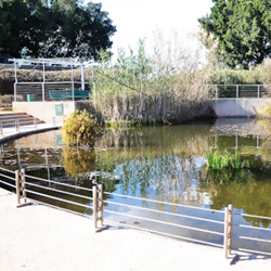 פארק כפר סבא - הבריכה האקולוגית - Kfar Saba Park - the ecological pool