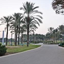 פארק כפר סבא - שביל בפארק - Kfar Saba Park - a trail in the park